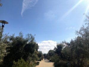 The California Garden is landscaped with nearly 50-thousand native and dry-climate plants, covering more than six-acres. This long, olive-lined allée leads through many of the garden spaces and buildings.