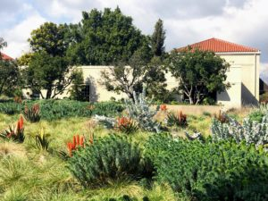 Adjacent to the center water feature is the Celebration Garden Meadow filled with aloes and various grasses and other specimens.