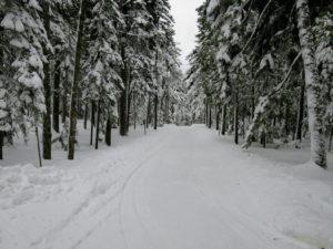 Here is the long back driveway - so much snow has covered the tree branches.