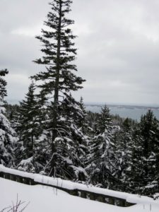 Here is one of the tall spruce trees that can be seen off the terrace. I love how it towers over the others. Seal harbor is in the distance.