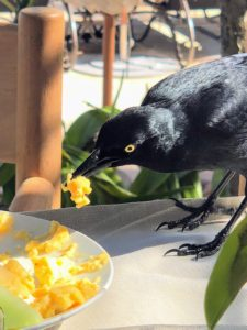 Kevin captured this avian friend sneaking a bit of my family's breakfast. Thanks for sharing these great photos, Kevin. Please see more on our Instagram pages @marthastewart48 and @seenbysharkey. And thank you to Dorado Beach, a Ritz-Carlton Reserve - my family had such a great time. I can't wait to return there with them!