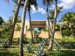 Here is another view of the Arrival Pavilion. Blue agaves in the foreground are surrounded by monkey and Mondo grasses and overhung with coconut palms. There is also a native ochre, or black olive tree, Bucida buceras, which has a high resistance to insects and fungi, and is sometimes used for house posts or bridge timbers.
