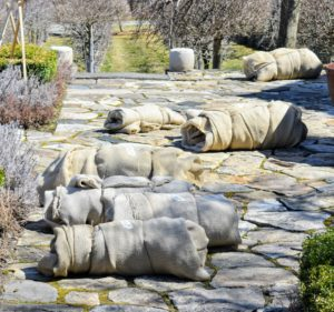 Once the temperatures are consistently above freezing, it's time to remove the protective burlap coverings from all the boxwood around the farm. All of the coverings are custom wrapped and sewn to fit each individual shrub, hedge, or bush.