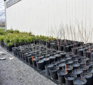 There are now more than a thousand tree seedlings potted and kept in this area. They are all organized by type and kept in sectioned rows for easy identification.