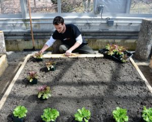 Ryan measures each bed to assess how many rows of each vegetable can be planted in the space. He takes into consideration the number of plants and the size of the vegetables when mature.