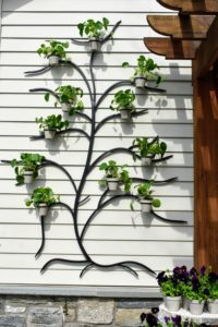 My 71-inch Metal Wall Tree is so much fun to use. Here it is in black, but it also comes in gray. These decorative trees can be used indoors and out. It comes with 11-pots for all your little plantings. The trees are easy to install on any kind of wall – wood, plaster, and even concrete.