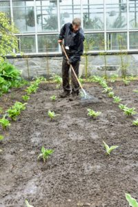 This day was quite rainy, so here, Gavin rushes to rake around the newly planted hostas so the beds are level and tidy.