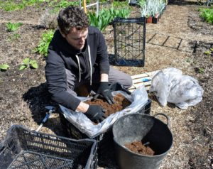 Ryan also prepares a batch of lily bulbs for the flower cutting garden. Around my farm, I have many, many lilies. I always plant the most interesting flower varieties I can find through trusted growers and from various nurseries I visit around the world.