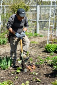 And here is Phurba following closely behind to make the holes and plant the lily bulbs.