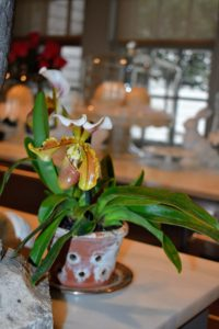 Across the counter, a lady's slipper orchid from my greenhouse. Decorating does not have to be fancy. Use houseplants you already have, and use them as decorations when they're blooming.
