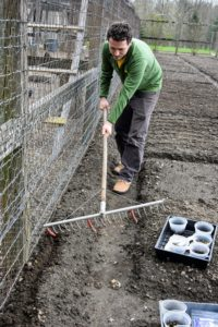 When ready to plant, Ryan starts by digging a shallow furrow in the soil using one side of a bed prep rake from Johnny's. Hard plastic tubes slide onto selected teeth of the rake to mark the rows for planting. Peas do much better when given some kind of support such as a fence or a trellis. Since the furrow is up against this fence, the pea vines should find the supportive wire very easily.