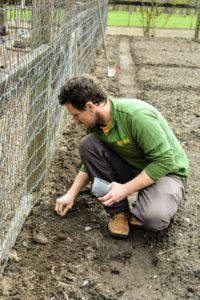 Ryan then drops the seeds into the furrow about one to two-inches apart.