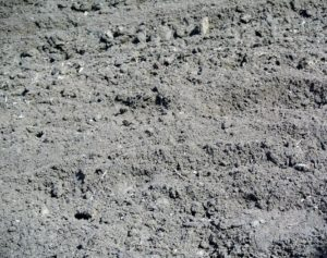 Once the soil is upturned, determine its condition – too much sand in the soil may make the soil too dry, and too much clay may make it too wet. The soil should be a good combination of earth, sand, and clay. My soil is very well balanced.