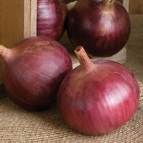 Red onions, sometimes called purple onions, have reddish-purple skin and white flesh, tinged with red. These onions are medium to large in size and have a mild to sweet flavor, though they contain less sugar than white or yellow onions. They are often consumed raw, grilled or lightly cooked to accompany other foods. 'Cabernet' produces medium-large globe-shaped onions with deep red color. (Photo from Johnny's Selected Seeds)