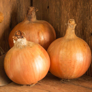 'Yankee' onions are medium-large globe-shaped bulbs with good skins and healthy tops. (Photo from Johnny's Selected Seeds)