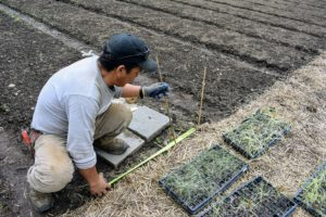 Phurba carefully measures the space between five furrowed rows in each of the onion beds.