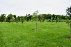 This is my orchard. We planted these trees a couple of years ago and I am so pleased with how well they have developed.