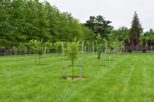 These trees produced many fruits in the first season - in part because of how nutrient-rich the soil is. When choosing to grow fruit stock, it is very important to select those that are best for your area's climate and soil.