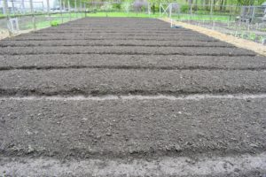 After three days of shaping and careful raking, all the beds are complete - they look fantastic.