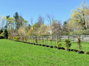 Here is a line of potted trees on the opposite side of this paddock.