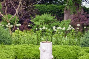 The garden behind my Summer House is always a favorite stop. The boxwood looks very lush and green. At the back of the garden is this row of beautiful white allium.