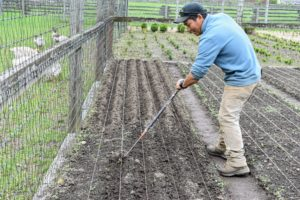 In this bed designated for leeks, Phurba creates deep furrows, about four to six inches down.