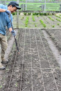 Onions can be planted in more shallow trenches. Here is Phurba preparing the next bed for our onions.