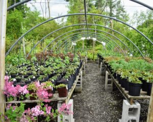 An uncovered hoop house displays lots of the smaller specimens - all well-maintained and lush.