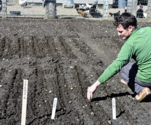 Ryan sprinkles the seeds in the furrows and then gently backfills the rows with soil. On this day, he planted seeds for carrots, turnips, parsnips, radishes, beets, herbs, and more.