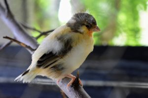 Here is another baby bird - its color combinations are so beautiful.