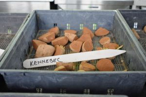 These are 'Kennebec' potatoes – short oval potatoes with smooth pale yellow skin, shallow eyes and white flesh. They're great for fries, hash browns, and many other uses even without peeling.