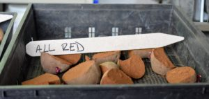 'All Red' potatoes are medium to extra-large tubers with smooth, brilliant red skin, medium shallow eyes and pink swirled flesh that retains its color after cooking. Like most reds, this variety is good for steaming or boiling and makes an attractive potato salad.