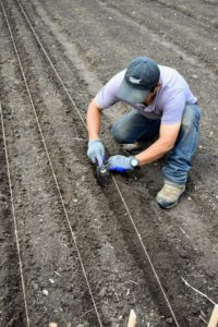 Phurba then digs the trenches under the twine using a right-angle trowel from Johnny's Selected Seeds. It is made of stainless steel, with a five-inch by three-inch blade and a five-inch handle. It's great for reducing strain on the wrists while gardening.
