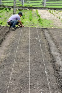 Meanwhile, Phurba prepares the beds down in the vegetable garden. He measures each of the beds to make sure the three planned trenches in each bed are equally spaced. He stretches twine from one end to the other to mark the beds, so every trench is straight.