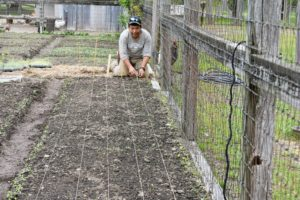 We wanted the onion plant rows to look tidy and straight, so to guide the rows, Phurba uses twine tied taut from one end of the garden bed to the other and secures with wooden stakes.