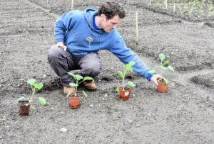 Ryan measures each square bed to assess how many rows of each vegetable can be planted in the space. He takes into consideration the number of plants and the size of the vegetables when mature.