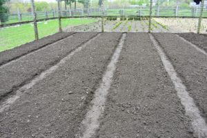 Each bed is raised about four to six inches off the ground and about three feet wide. If building a new vegetable garden, test the soil to gain more knowledge of its pH, phosphorus, lime, potassium, soluble salts, and soil texture. Soil testing kits are available at garden centers, or through a local cooperative extension.