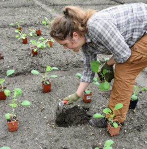 As each group of plants is positioned, Zoe follows behind to plant. She uses a right-angle trowel from Johnny's Selected Seeds. Designed for transplanting, it is made of stainless steel, with a five-inch by three-inch blade and a five-inch handle. It's great for reducing strain on the wrists.