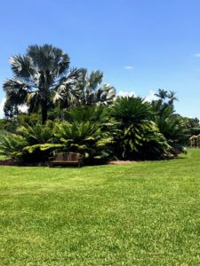 Also at Fairchild - a stunning collection of cycads. I love cycads and also keep many specimens at my Bedford, New York farm.