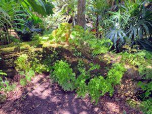 This ledge overlooks Fairchild's Sunken Garden. It's covered in maidenhair ferns and begonias.