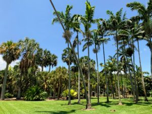 The Montgomery Palmetum is 13-acres large and displays at least a thousand palms.