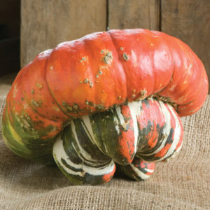 And this colorful pumpkin is called 'Turk's Turban' - a buttercup-shaped fall display pumpkin. It has a prominent blossom end button that is striped silver, green, and white with a scarlet top that measures seven to nine inches across. (Photo from Johnny's Selected Seeds)