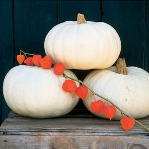 'Valenciano' has snow-white skin – it is among the whitest of pumpkins. It makes a unique doorstep decoration. 'Valenciano' pumpkins are slightly ribbed, medium-sized and flatter in appearance. (Photo from Johnny's Selected Seeds)