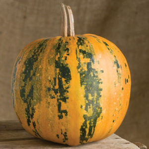 'Kakai' is an eye-catching, medium to small, black-striped pumpkin. After displaying the pumpkins in the fall, it's nice to scoop out the large, dark-green, hull-less seeds – they're delicious roasted. (Photo from Johnny's Selected Seeds)