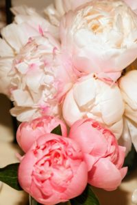 Among my favorite flowers is the peony - these pink and white blooms are beautiful. My peony garden at the farm is also bursting with colorful peony flowers! I will share those photos with you very soon. (Photo by Sylvain Gaboury/PMC)
