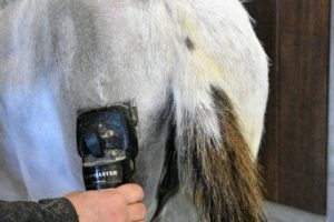 A medium blade is used on the clippers for all the donkeys. It's also important to stop every few minutes to brush any loose hair from the clipper head and vent. This will help to prevent the clippers and blades from getting too hot.
