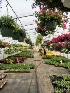 After finishing our planting chores out on my Skylands terrace, we took a short drive to Surry Gardens, in Surry, Maine. I visit this nursery often. It has more than five acres dedicated to growing and selling the area's largest selection of unusual perennials and classic shrubs.