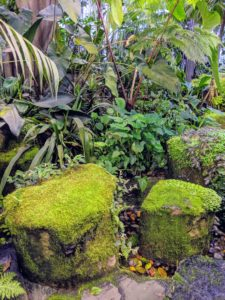 I loved seeing these mossy rocks. The Spheres provide such a direct link to nature.