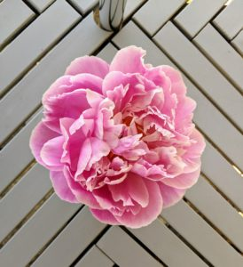 Peony blooms lined the tables on the terrace parterre.