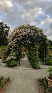 Here is a closer look at the gazebo with all its beautiful roses in bloom.